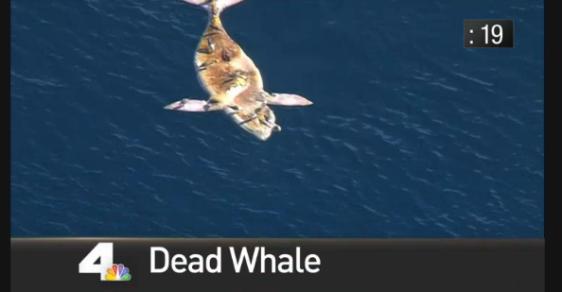 4inforty-deadwhale